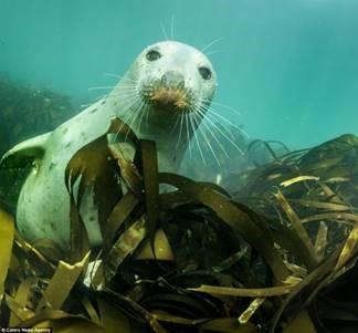 Seal, Farne Islands